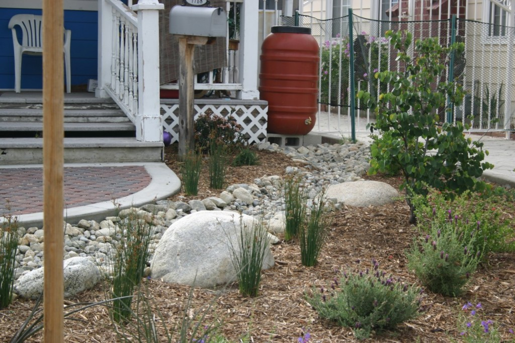 Rain barrel in a home garden