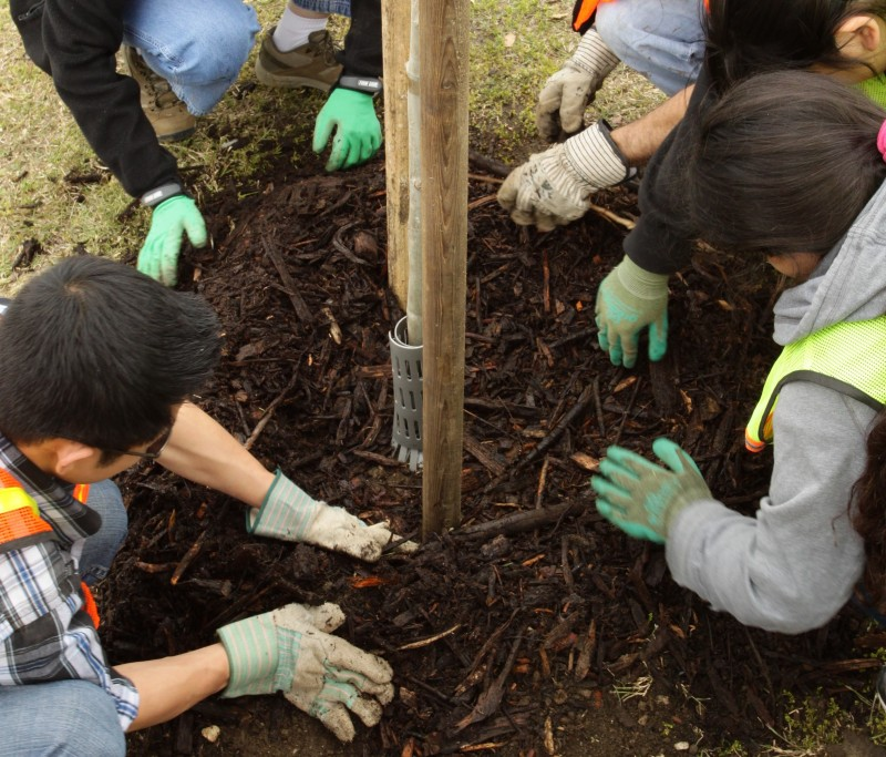 Community planting in Eagle Rock