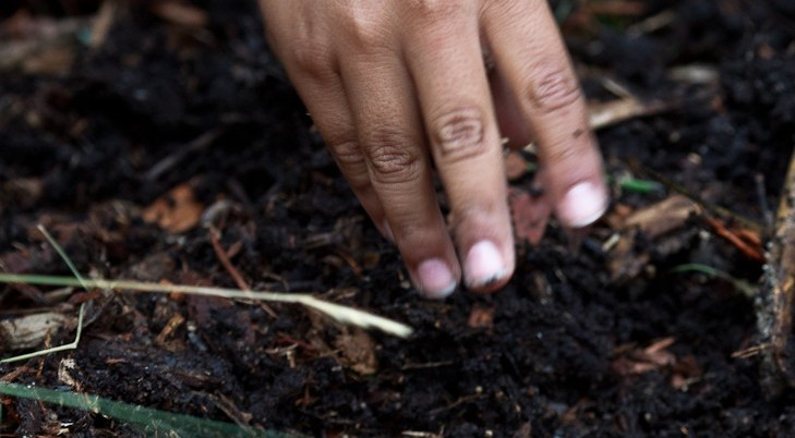 Soil is the key to life in the urban forest