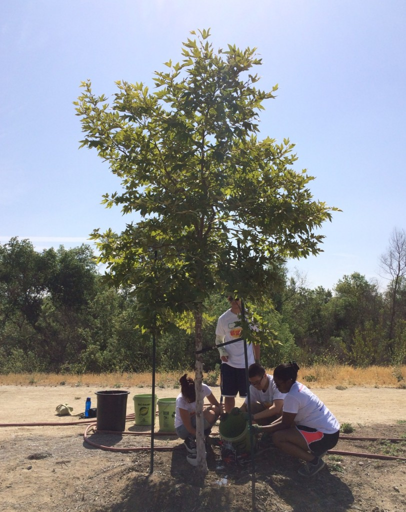 Showering a tree with some much needed water
