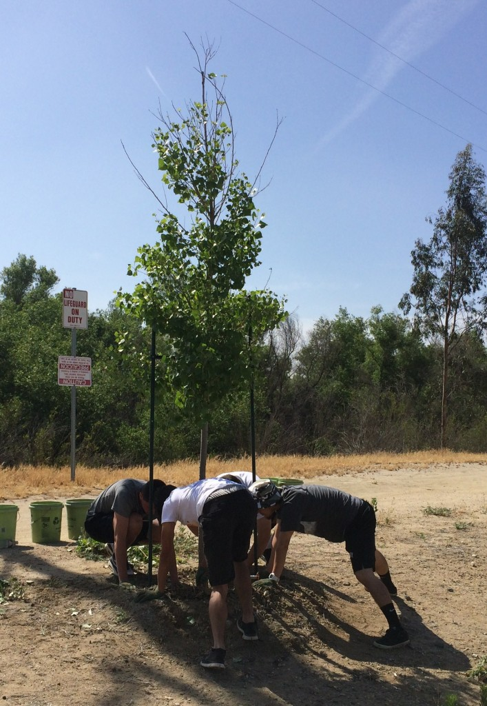 Pruning weeds around the base of the tree so that water can reach its intended location, the tree's roots