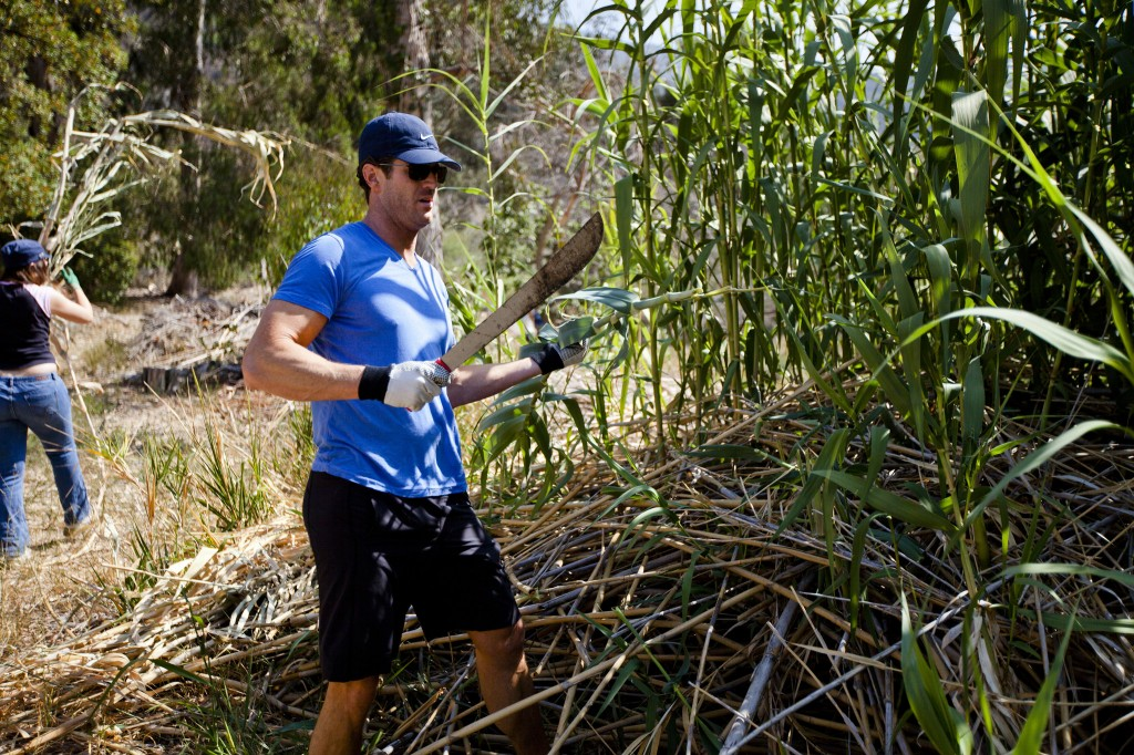 Volunteers cleared a huge patch of bamboo with machetes and clippers, making room for native plants to grow.