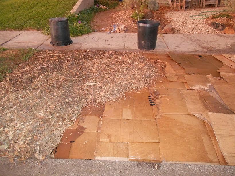 sheet mulch in progress