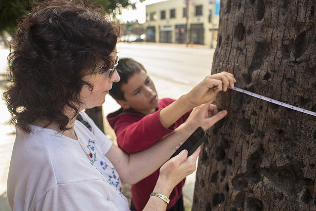 Silverlake Neighborhood Council tree mapping
