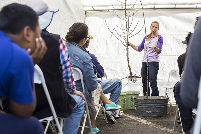 Tree care and planting workshop in Inglewood