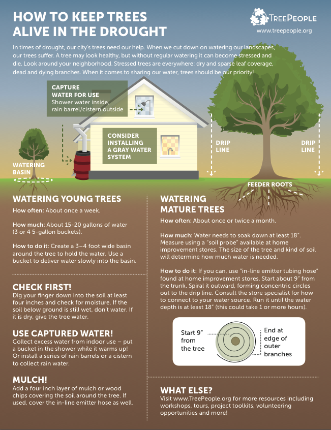 How to Keep Trees Alive During the Drought