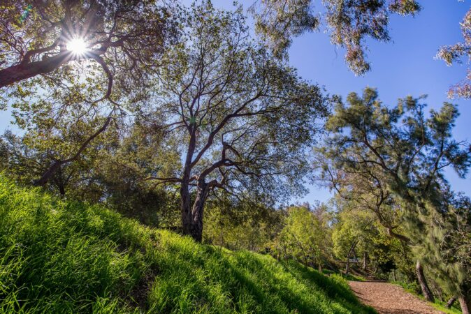 coldwater canyon park trail