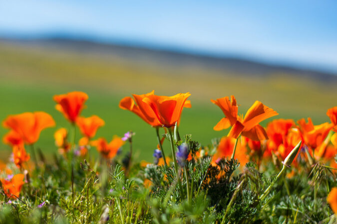 create your own superbloom