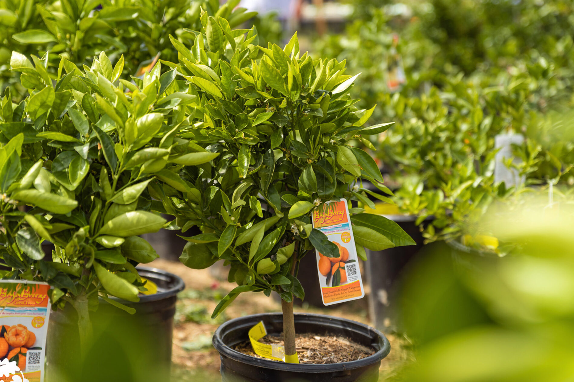 how to read a fruit tree tag