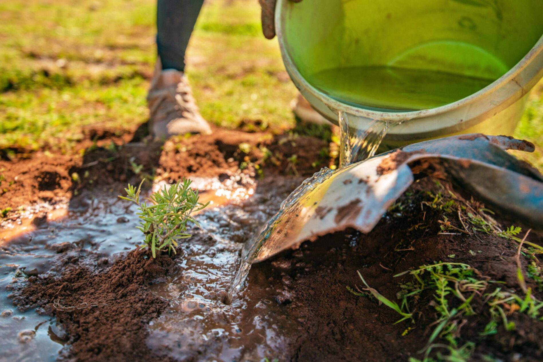 soil primer