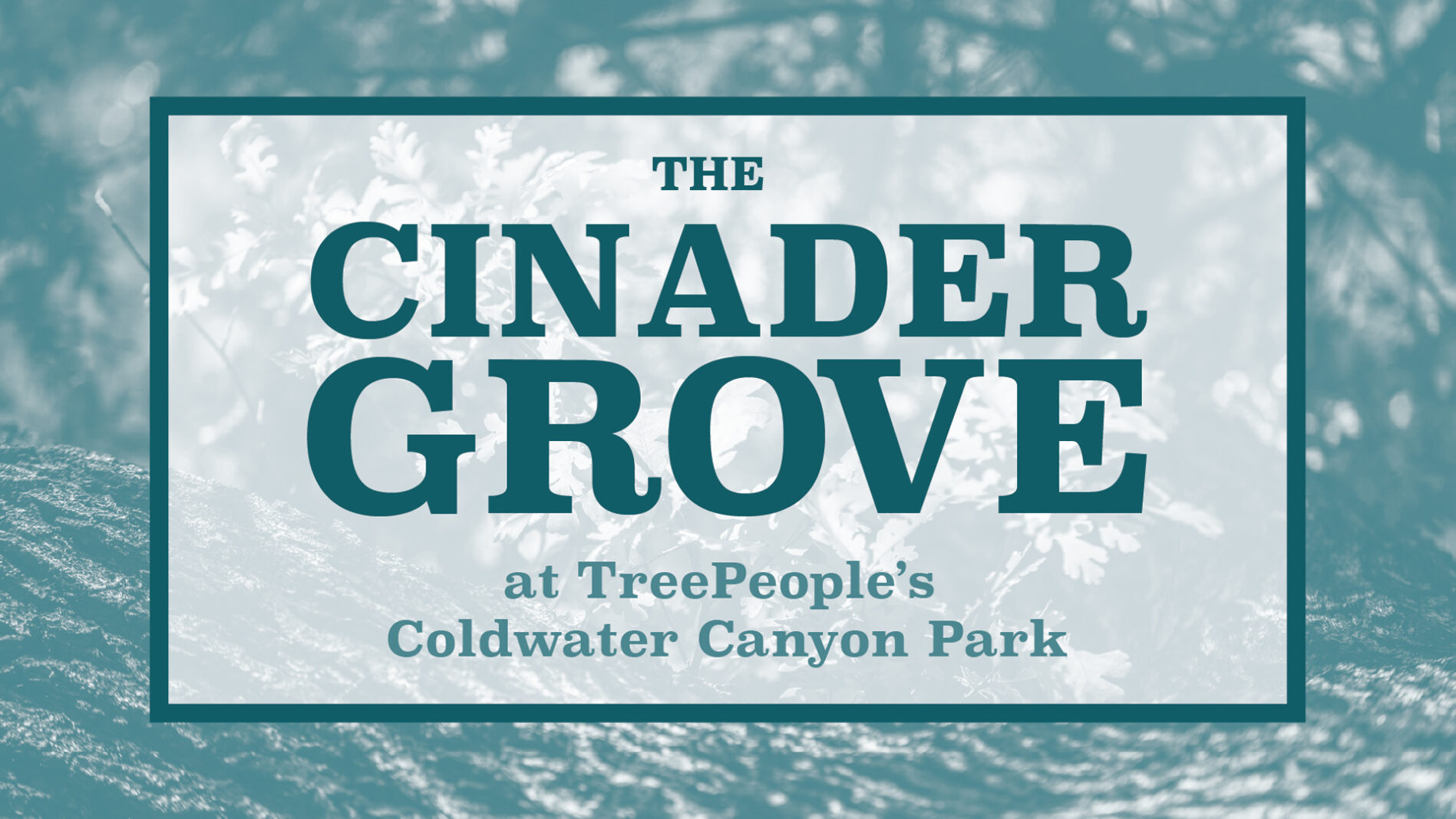 The Cinader Grove at TreePeople's Coldwater Canyon Park