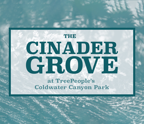 The Cinader Grove